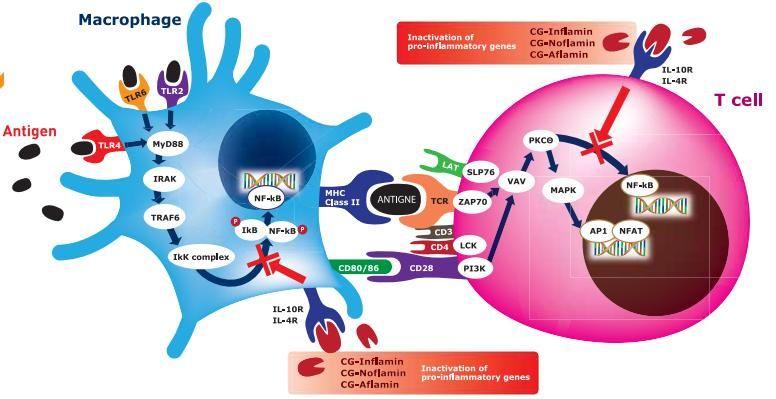 Псориаз олигопептиды форум пептиды для роста мышц длительного действия